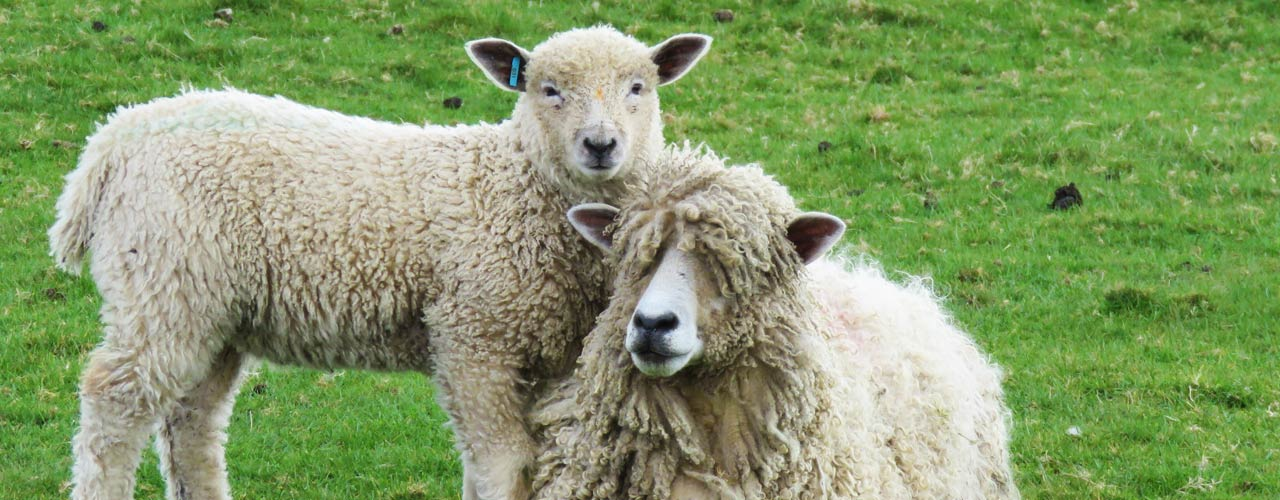 Leicester Longwool Sheep Breeders Association